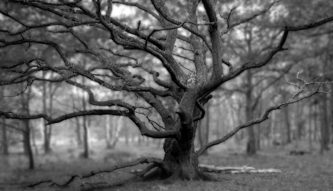 Wicked Tree - click for previous